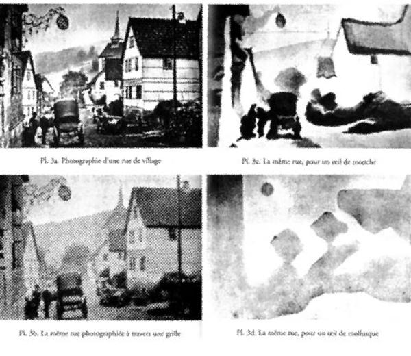 Umwelt/Umgebung. Vision d'une rue pour une personne humaine, une personne <br/>humaine derrière une grille, une mouche ou un mollusque. Planche de Jacob von Uexküll